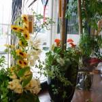 アレンジメント&観葉植物