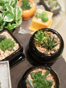 多肉植物 サボテン ハオルチア