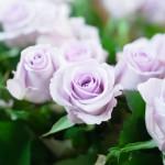 バラ オーシャンソング
