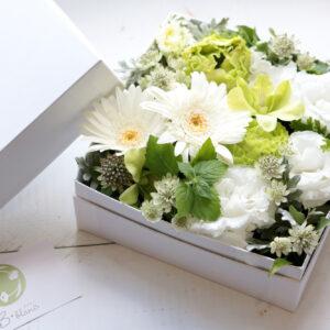 BOX-arr-13