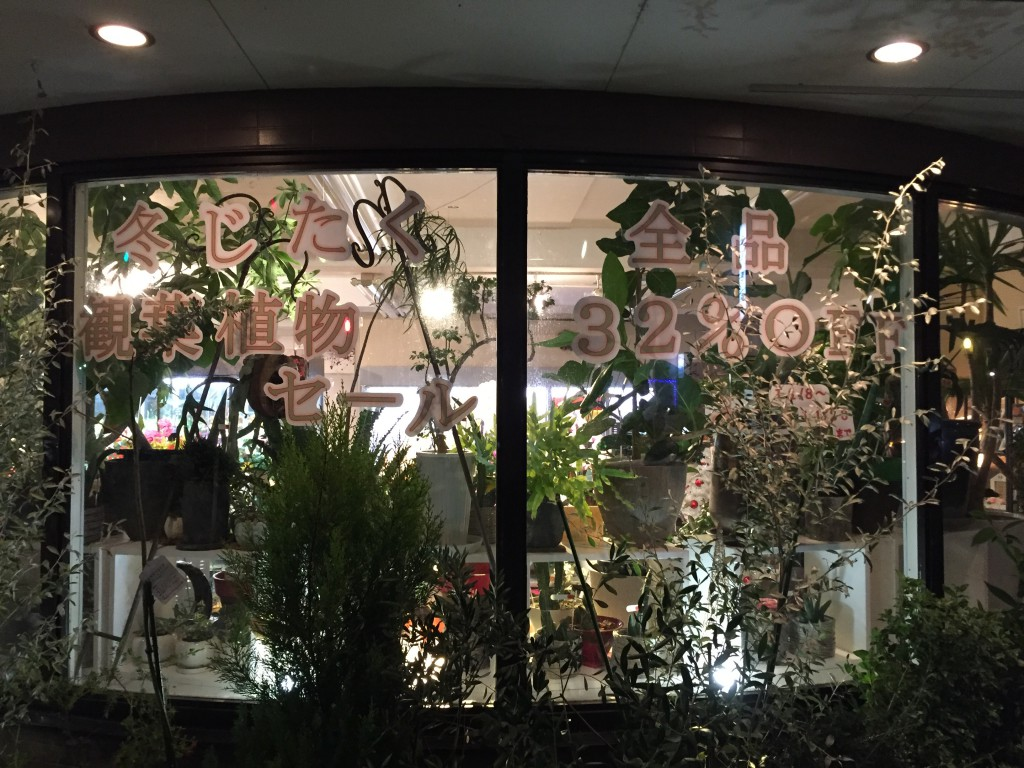 観葉植物セール
