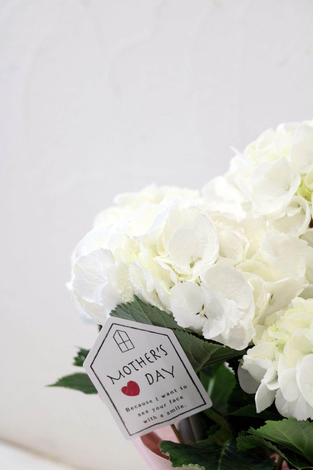 母の日 花鉢 アジサイ シュガーホワイト
