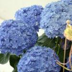 osonae_flower